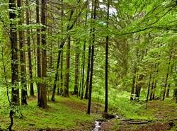 Informacja dla osób fizycznych – właścicieli lasów